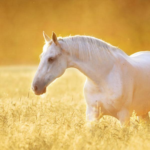 馬のマークのプリムはちみつ石けんシリーズ6種